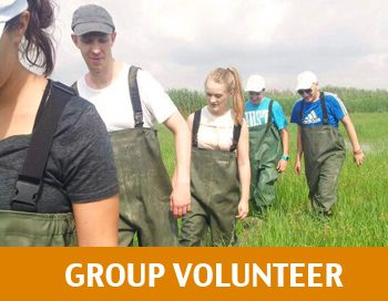 GROUP VOLUNTEER ENGLISH 2